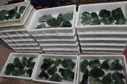 Boxes of fluorite